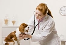 Dog Diseases Guide