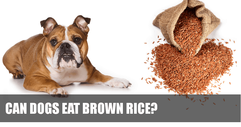 can dogs eat brown rice is brown rice good or bad for dogs
