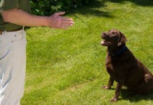 Dog Experts and Trainers