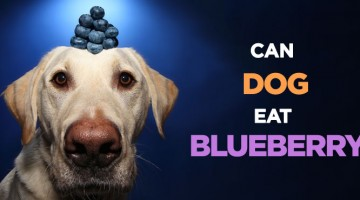 Can Dogs and Puppies Eat Blueberries