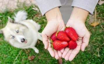 How Are Strawberries Good For Dogs