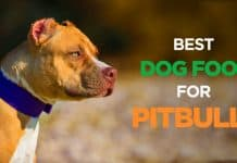 Best Affordable Dog foods for Pitbulls Puppies