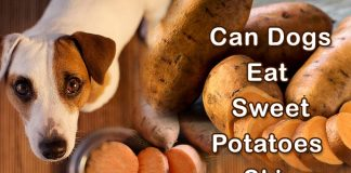 Can Dogs Eat Sweet Potatoes Skin