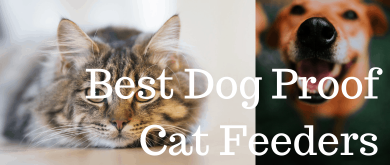 Best Dog Proof Cat Feeders Review